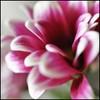 albelen366 аватар